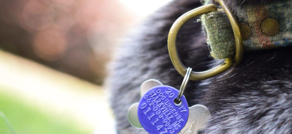 Starkville Dog Licensing
