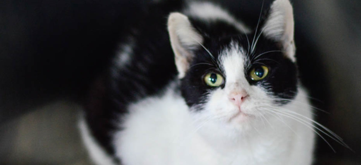 Pets of the Week (12-1)