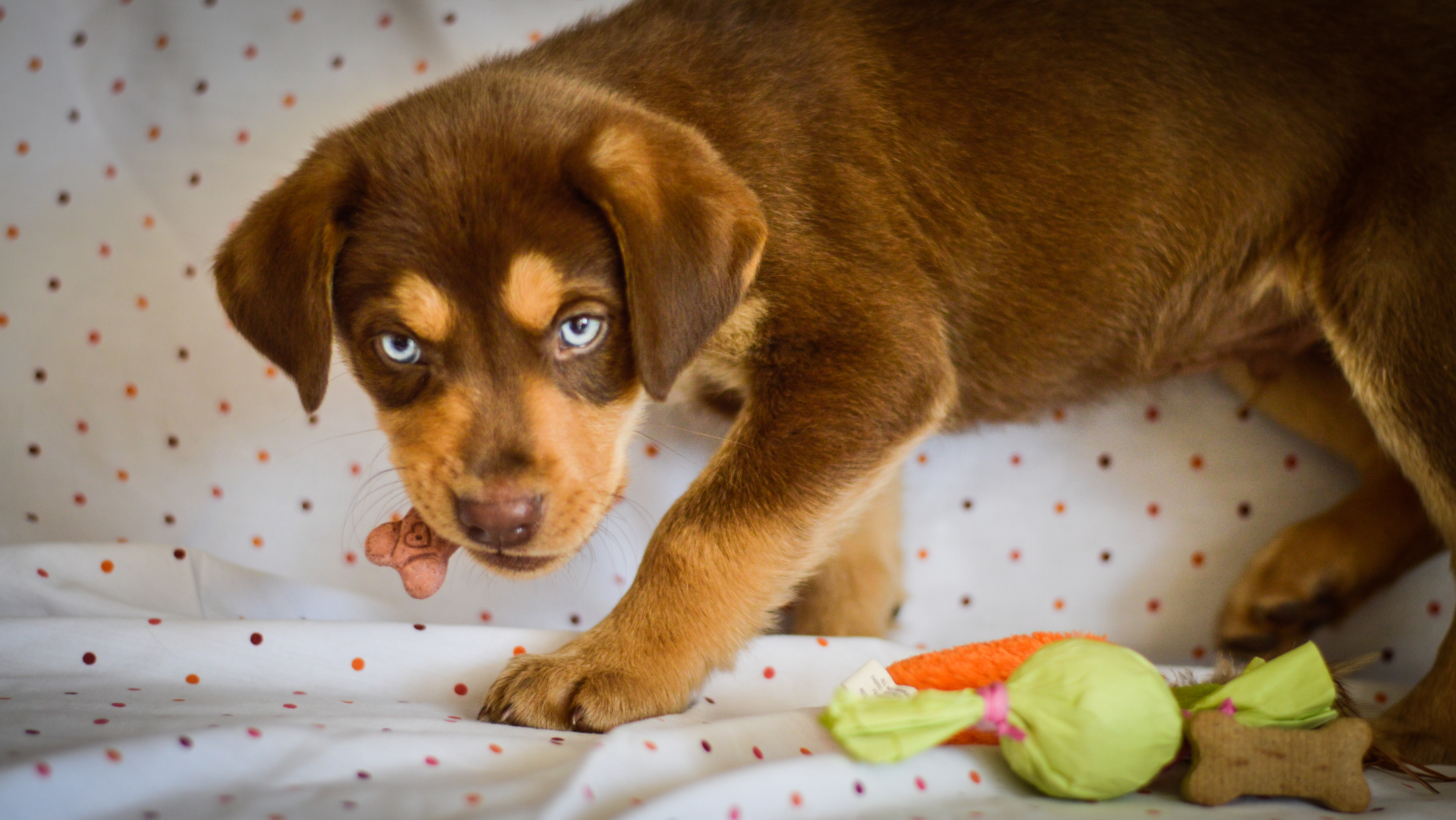 Four Tips For New Puppy Owners – Oktibbeha County Humane Society