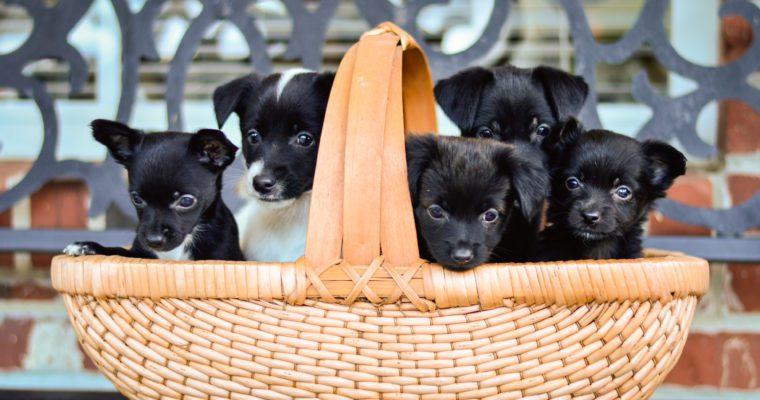 Donna Reese – Oktibbeha County Humane Society