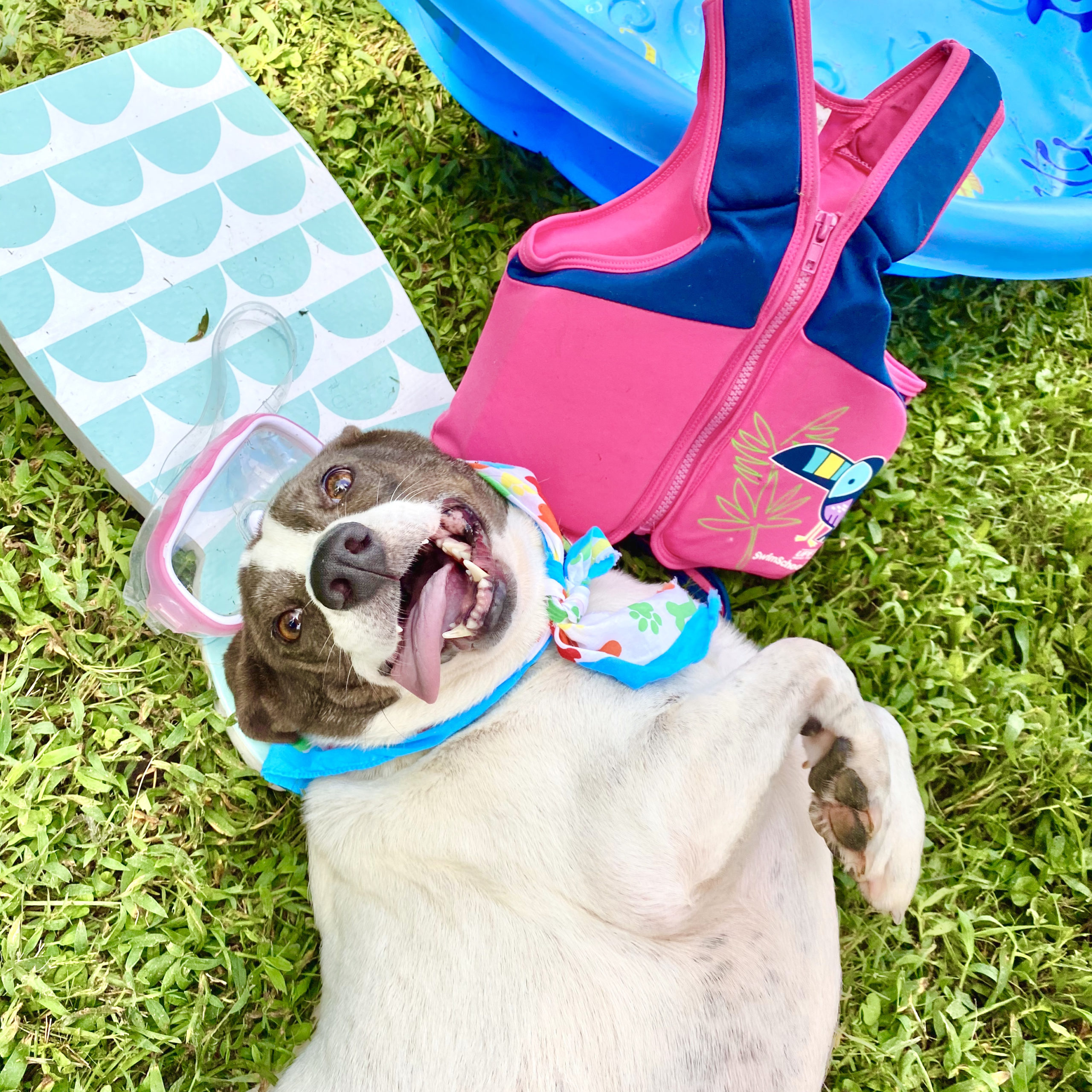 10th Annual Dog Paddle Pool Party going VIRTUAL August 24-29