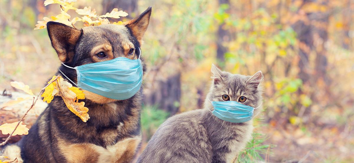 Coronavirus Update #3